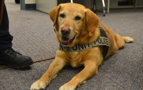 Brody rests while Officer Rather explains the duties of a drug dog and how himself and Brody became partners (Photo by Olivia Lighty).
